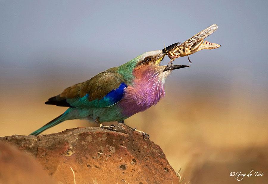 Грег дю Туа (Greg du Toit) фотограф дикой природы