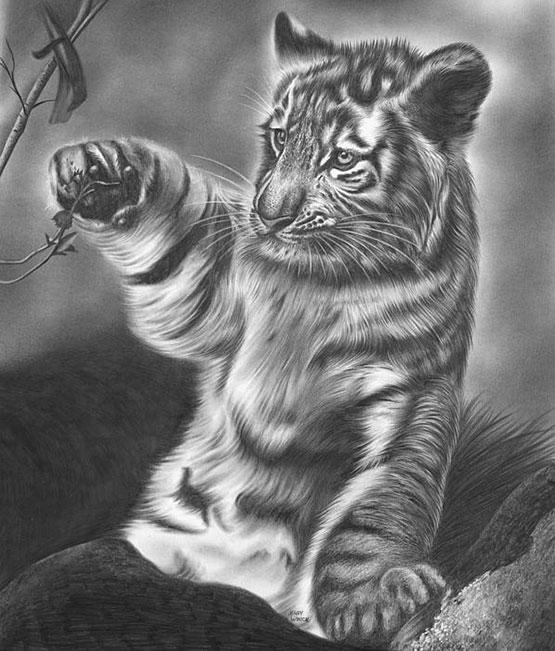 некоторых, картинки тигров и тигрят карандашом можно было встретить