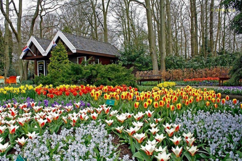 Парк Кёкенхоф (Keukenhof), Голландия — JuicyWorld