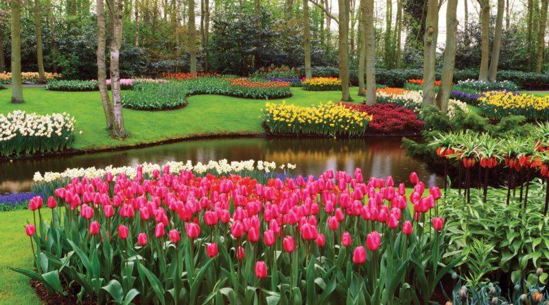 Парк Кёкенхоф (Keukenhof), Голландия