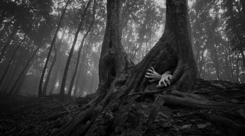 PhotoCosma – «Предрассветный лес»