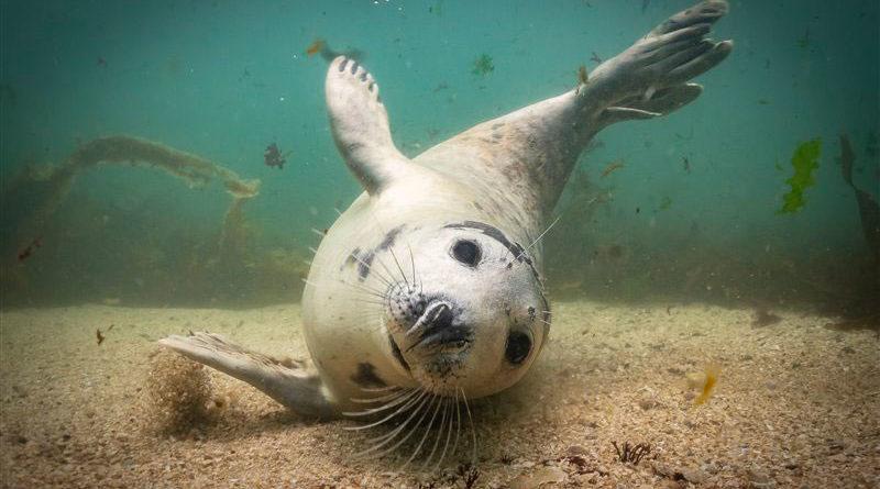 Конкурс Подводный фотограф (UPY 2019) — лучшие фотографии (ч.3)