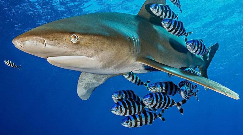 Алекс Мастард (Alex Mustard) — подводный фотограф