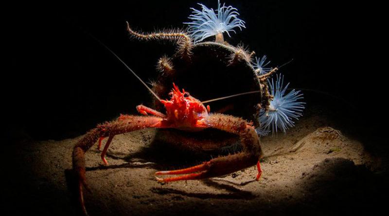 Фотоконкурс Underwater Photographer (UPY 2019) объявил победителей.