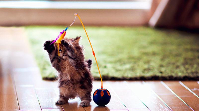 Бен Тороде (Ben Torode) – фотограф и котенок Daisy