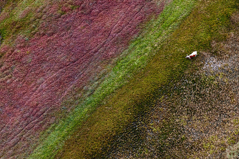 Зак Секлер (Zack Seckler) – фотохудожник (аэрофотография)