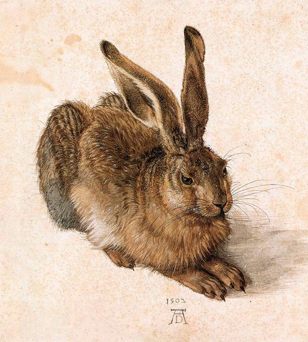 Альбрехт Дюрер. Заяц, 1502