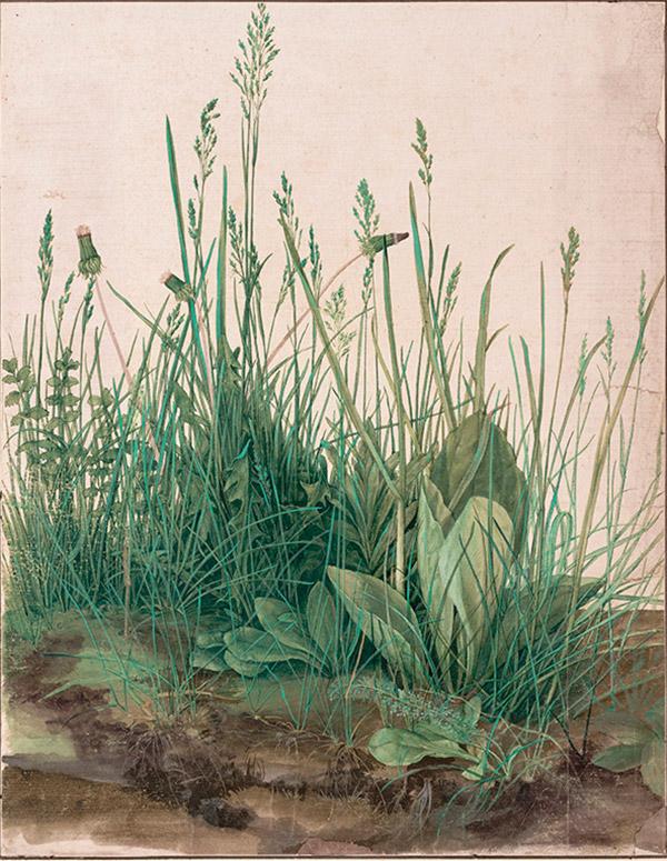 Альбрехт Дюрер. большой кусок - Трава, 1503