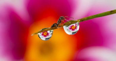 Кутуб Уддин (Kutub Uddin) – фотохудожник