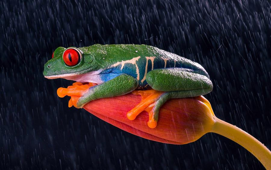 Кутуб Уддин (Kutub Uddin) – фотограф, макросъемка