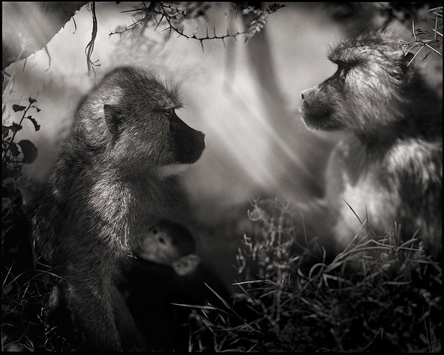 Ник Брандт (NickBrandt) – фотохудожник